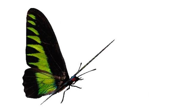 Анимационное изображение бабочки